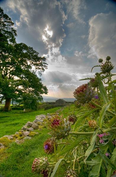Castle Bolton Gardens by Syl