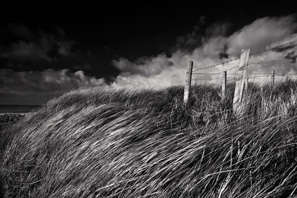 Sea Breeze by Mari