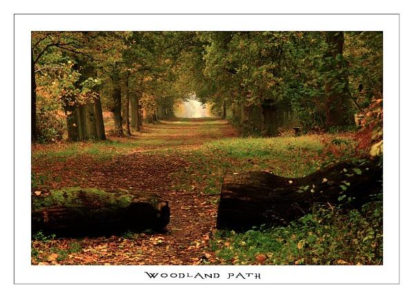 Woodland Path by markharrop