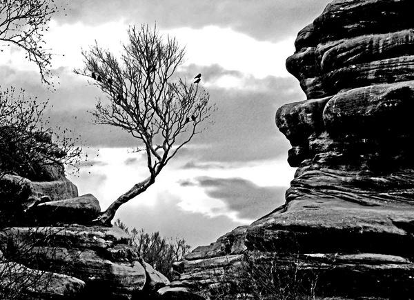 Nicks Tree by dk.snakes