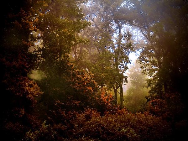 forest corridor by Silvijo