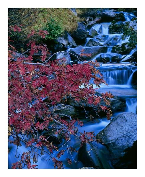 Mountain Ash & mountain stream by joolsb