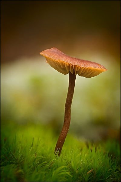 Laughton Fungi by Wooly