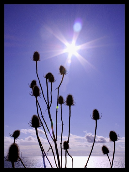 Teasel & Sunshine by JuliaGavin