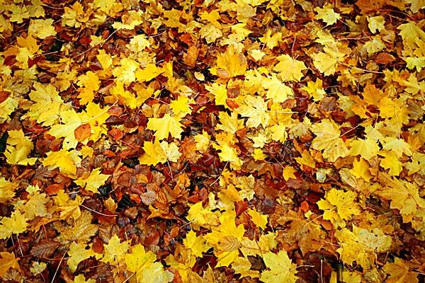 Autumn carpet by Steb