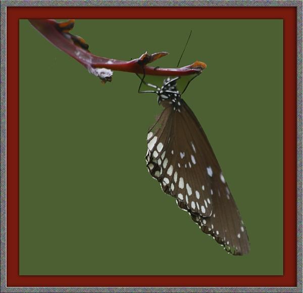Butterfly by jwt