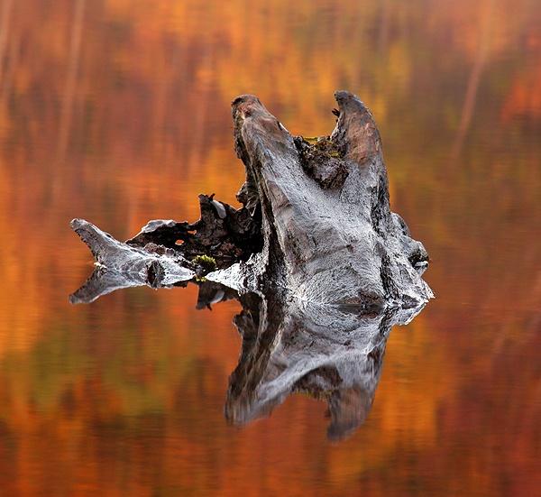 The Stump by trekpete