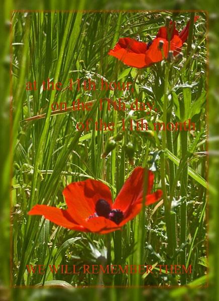 armistice by CarolG