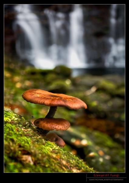 Glenariff Fungi by garymcparland