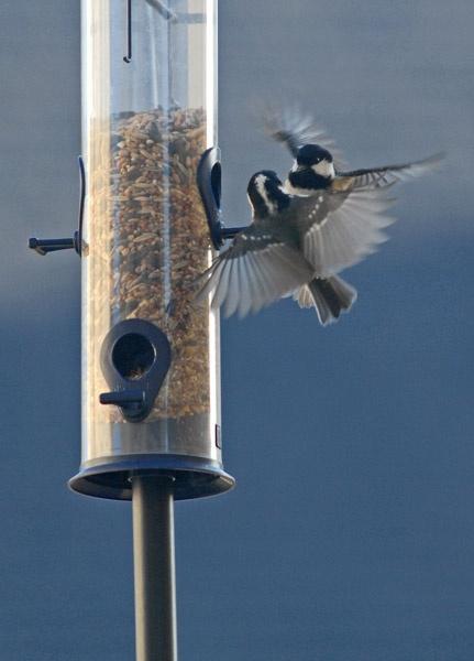 bird fight by RosePhoto