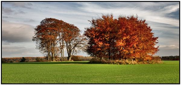 Autumn Island by oll1e