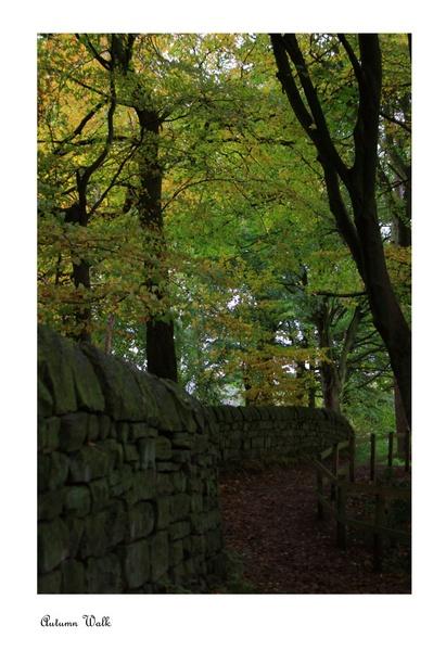 Autumn Walk by Rivergate