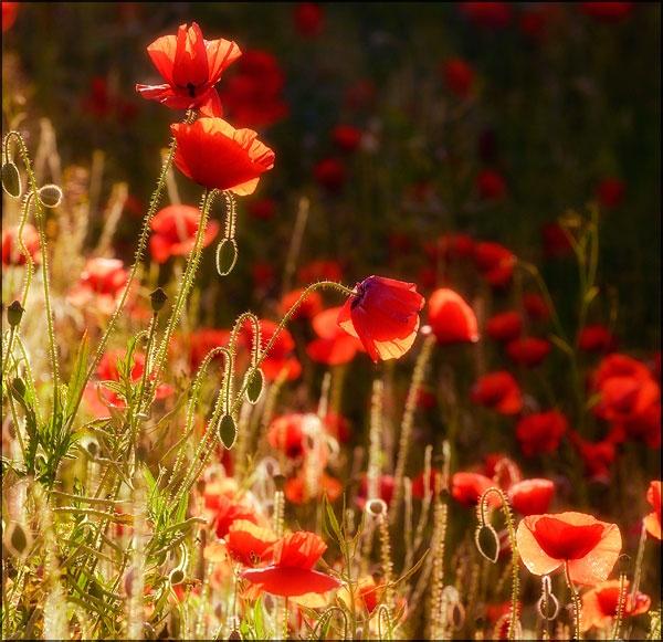 Rememberance Sunday by jogafoto