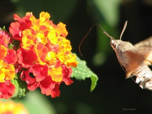 Moth by MartinAgius