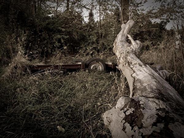 Overgrown... by blumonkey