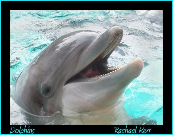 dolphins by rachaelk