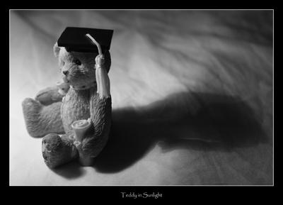 Teddy Ponders by rutterphotography