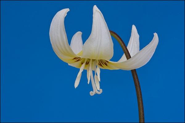 white splendour by JOHNYCAD