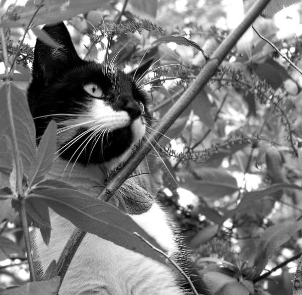 The Feline Hunter by DebbieBMP