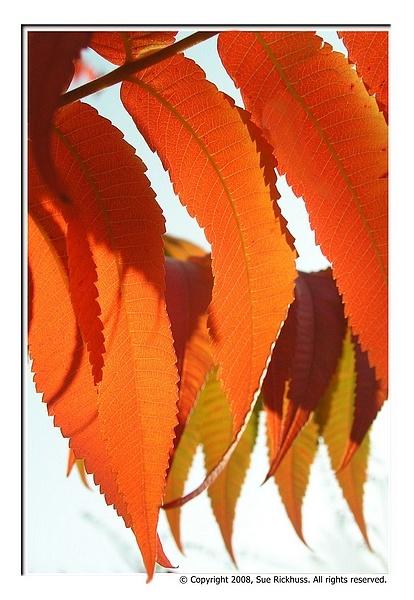 autumn by MacroRebel