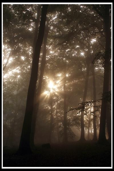 Autumn mist by jimbo_t