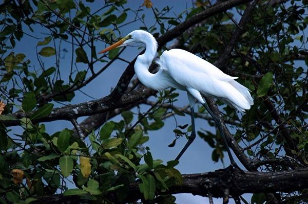 Egret by StuartDavie