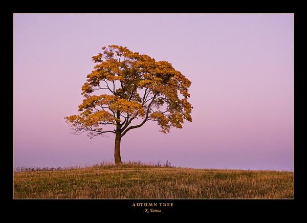 Autumn Tree by tumienis