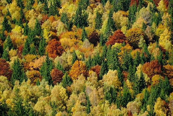 Carpathian Autumn by Stuarty