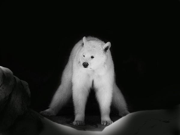 bear by beriah