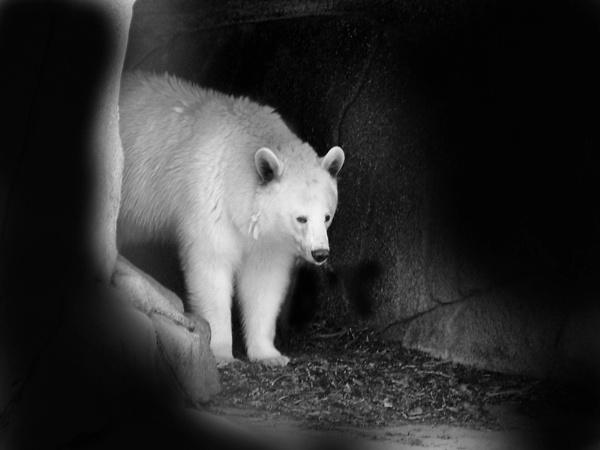 bear - last animal pic by beriah