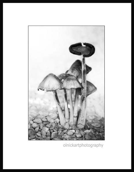 mushrooms by beriah