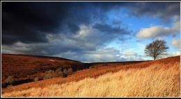Egton Moor