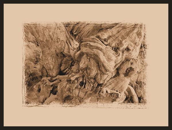 tree stump by penelope_r