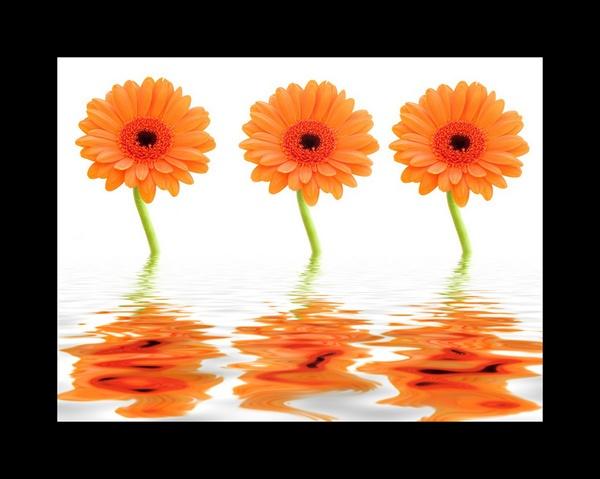 The colour off orange II by allan_j