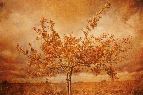 Golden tree by davidturner