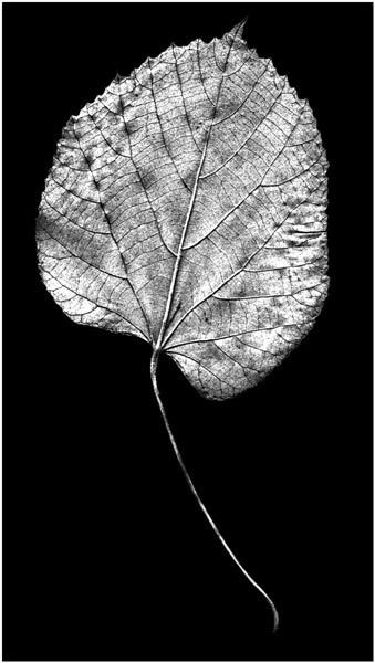 leaf by wavey