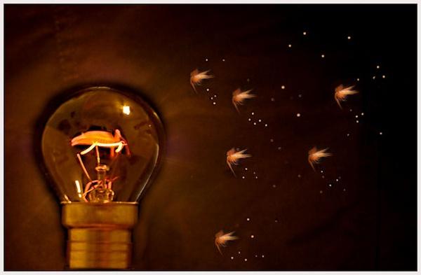 Drawn to the light by BilT
