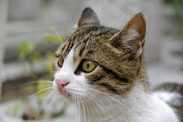 Cat\'s eyes by piotro