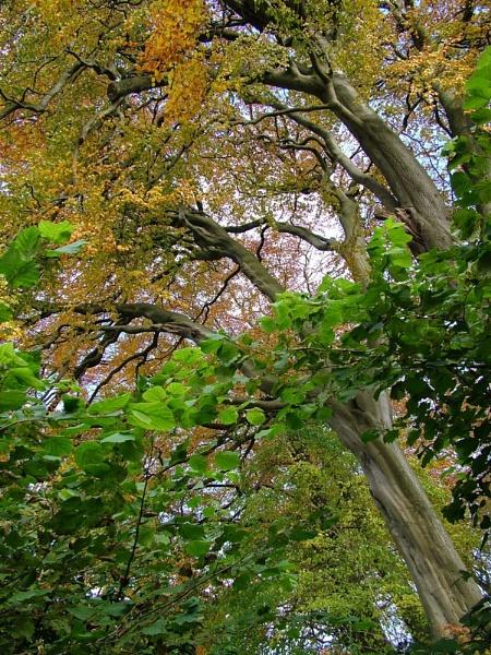 Lyme Tree by alansdottir