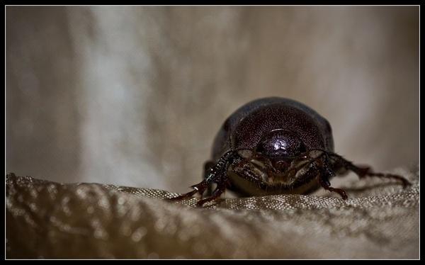 Beetle Juice2 by deja008