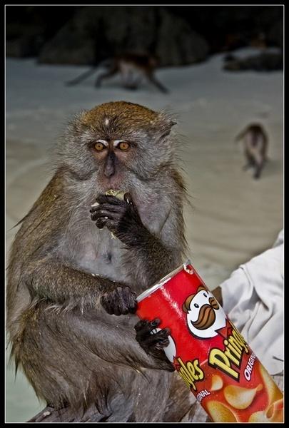 Monkey Beach2 by deja008