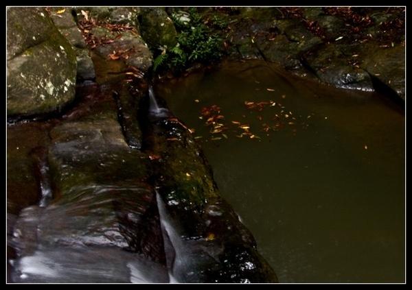 Buderim Falls by deja008