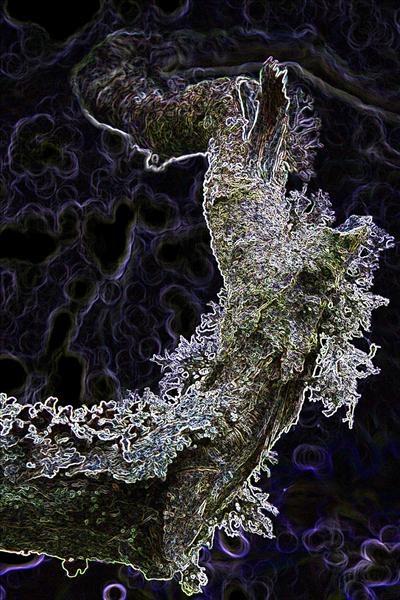 Branch by airfreq