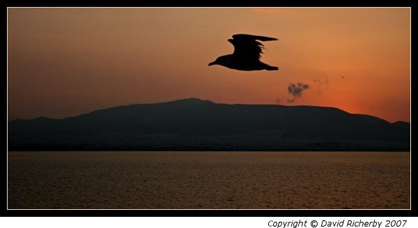 Gull at sunrise by DRicherby