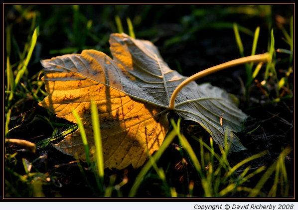 Fallen leaf (I) by DRicherby