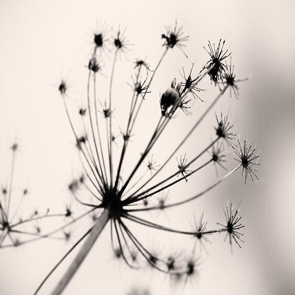 tiny spiders by steve allsopp
