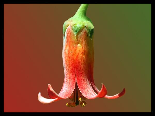 Succulent by ShedMan