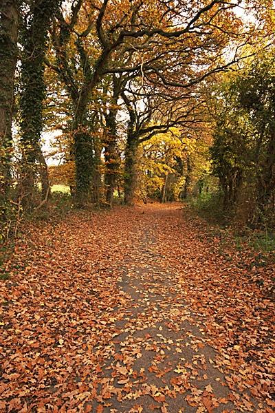 Leafy Lane by Steb
