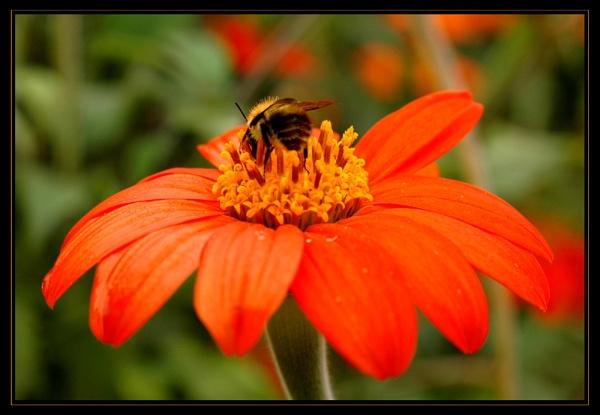 Busy bee by LizzieN