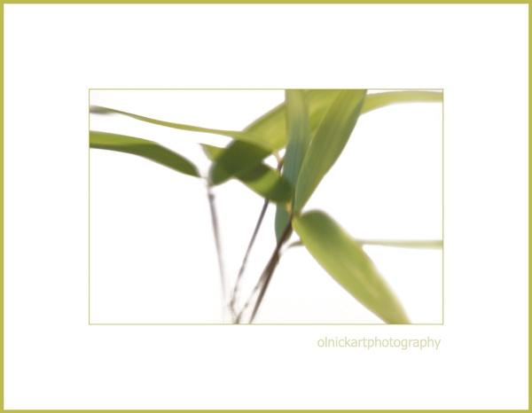 bamboo-lensbaby by beriah